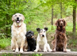 Are mixed breed dogs healthier than purebreds